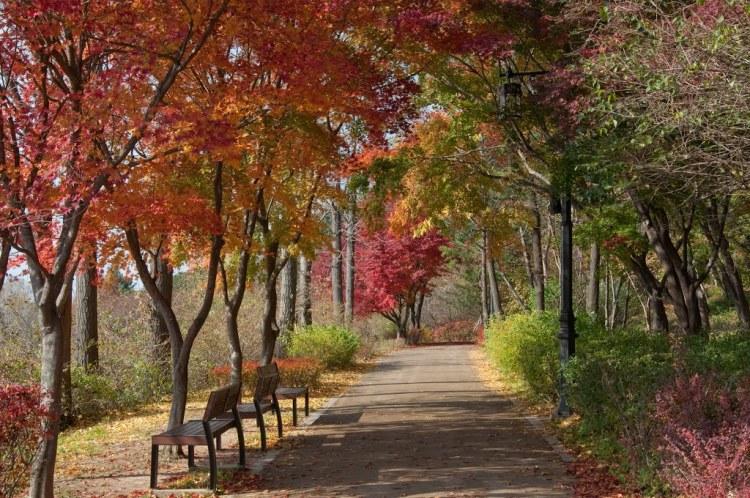 namsan park autumn