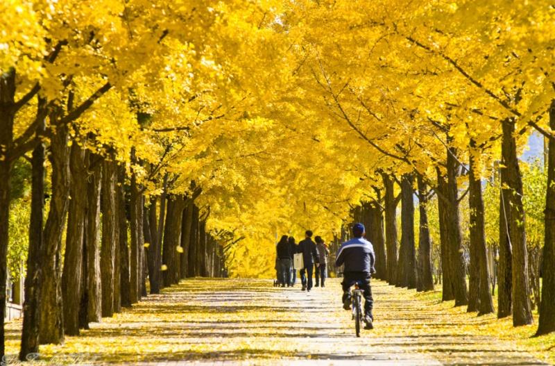 wiryeseong gil autumn